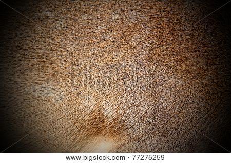 Dark Fallow Deer Fur