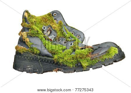 Old Shoe Overgrown With Moss