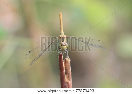 dragongly sit on branch in summer day