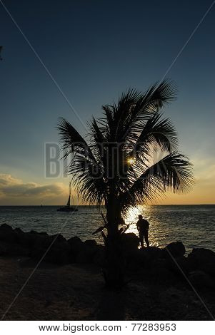 Tropical Paradise Silhouette