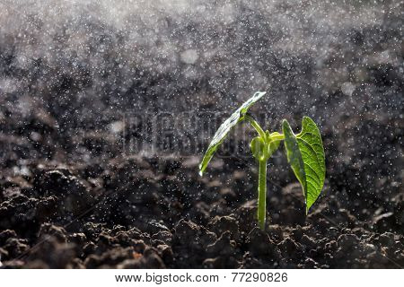 Green seedling growing on the ground in the rain