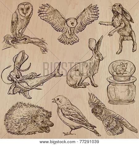 Animals Around The World (part 17). Hand Drawn Vector Pack.