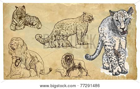 Animals, Theme: Big Cats - Hand Drawn Vector Pack