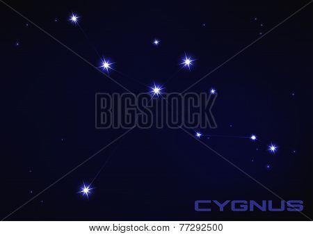 illustration of Cygnus constellation