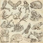 stock photo of freehand drawing  - Animals around the world  - JPG