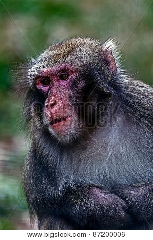 Portrait Of Monkey 5