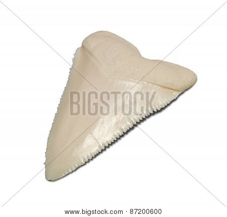 Shark Teeth Isolated On A White Background