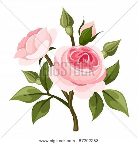 Branch of pink roses. Vector illustration.