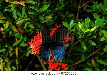 Big Tropical Butterfly