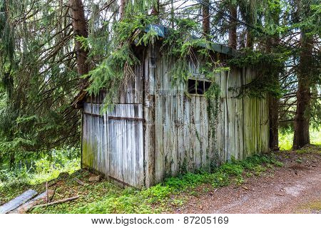 Overgrown Wooden Shed In A Forest In The Pyrenees