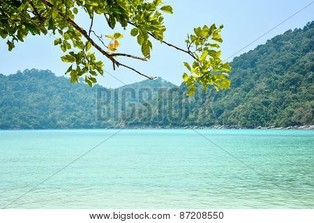 Andaman Sea And Branches Of Tree