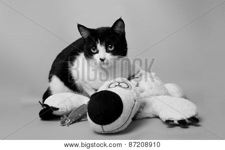 Black And White Cat With A Teddy Bear Studio Photo Monochrome Image