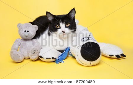 Black And White Cat With A Teddy Bear Studio Photo