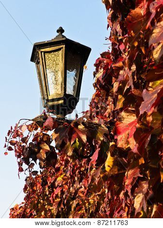 Red and yellow autumn leaves by the lantern at Kalemegdan fortress walls