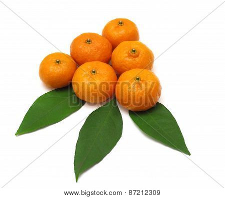 Ripe Tangerines Or Mandarin With Leaf Isolated On White Background