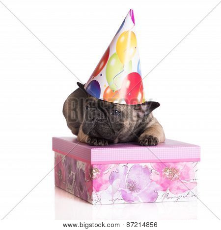 french bulldog puppy in a birthday hat
