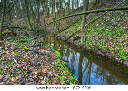 Small River In Springtime Forest