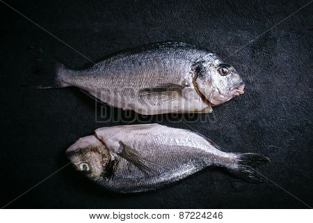 Gilthead Fish