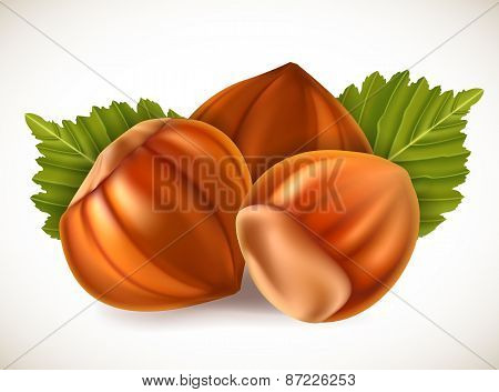 Filberts with leaves. Vector illustration.