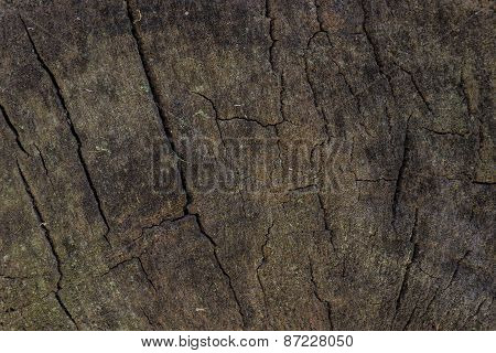 Wooden Tree Pattern, Rustic Design Element.