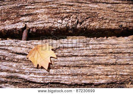 Leaf Tree On A Wood Table