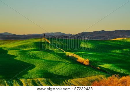 Tuscany, Cypress Tree On Hill And Green Fields On Sunset. Siena. Crete Senesi, Italy.