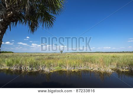 Everglades Florida USA