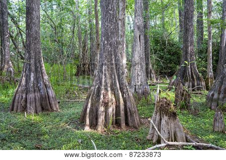 Big Cypress National Preserve Florida USA