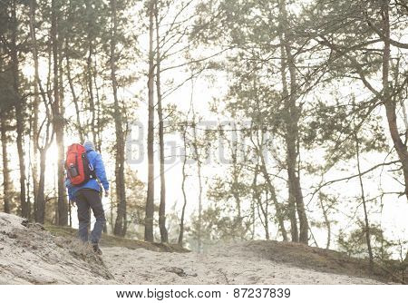 Rear view of male hiker in forest