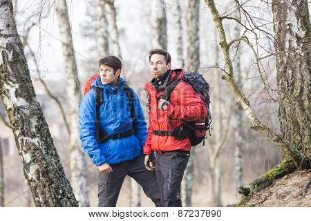 Young male hikers in forest