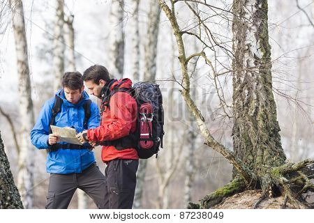 Male backpackers reading map in forest