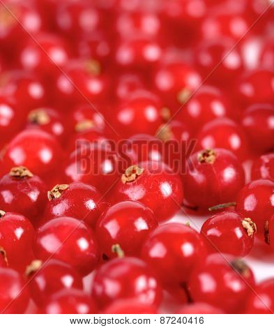 Studio soht of redcurrants - close-up