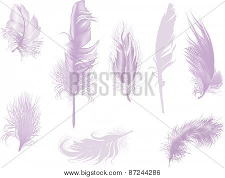 illustration with eight lilac feathers isolated on white background