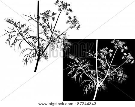 illustration with dill isolated on white and black background