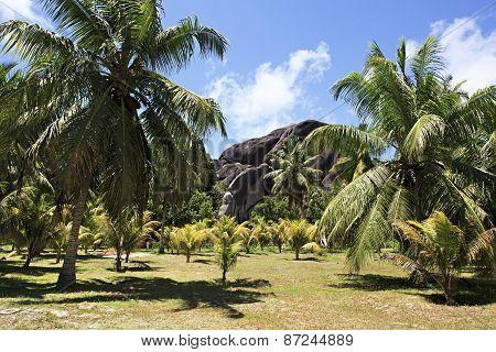 Beautiful enormous black granite rocks in a palm grove