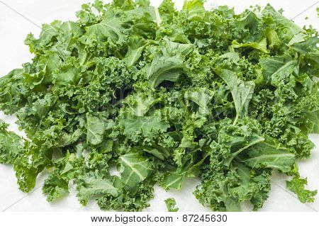 kale leaves on white background