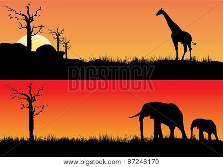 Africa Sunset And Animals