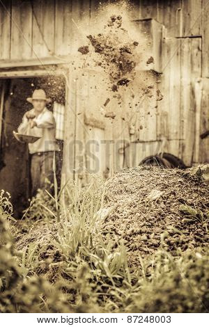 Farmer Shoveling The Horse Manure