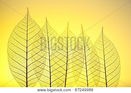 Skeleton leaves on yellow background, close up