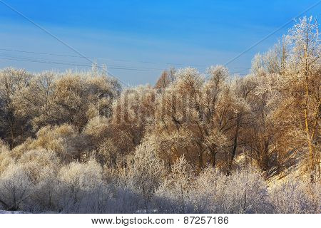 Trees with hoarfrost at winter