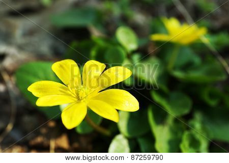 Yellow flower, outdoors, closeup