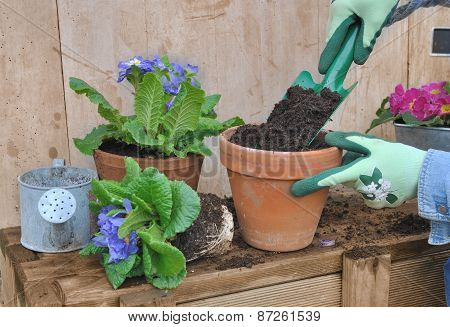 Filling Flower Pot