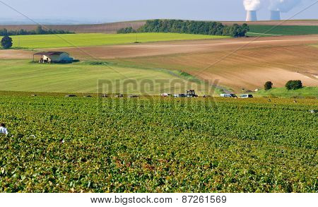 Champagne Landascape During The  Harvest
