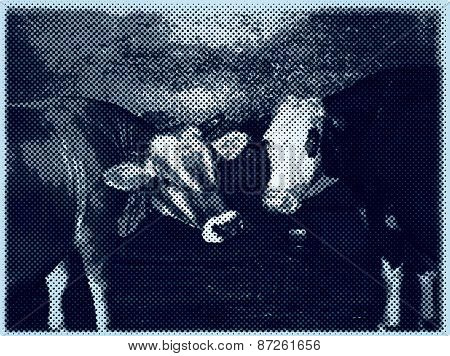 vector cows in dotted raster halftone