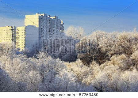 Trees with hoarfrost at winter and apartment house