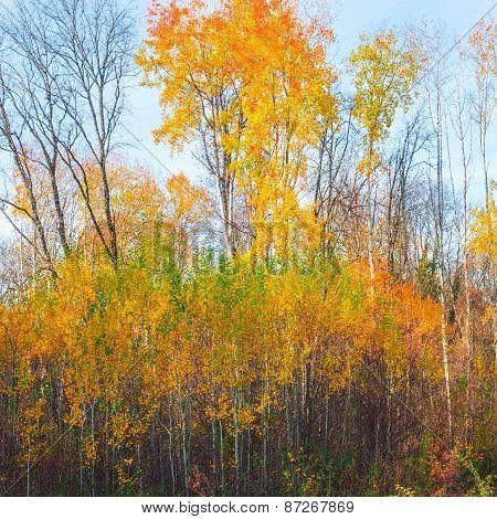 Beautiful Autumn Forest