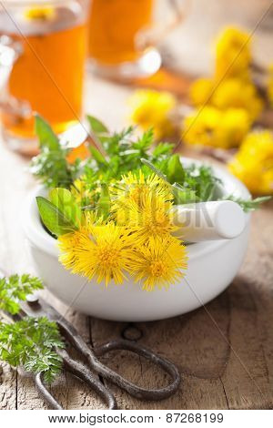 coltsfoot flowers spring herbs in mortar and herbal tea