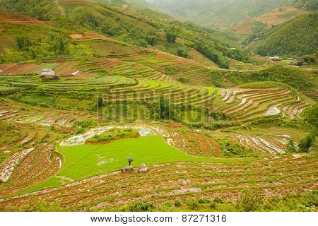 Rice paddies in the mountains, Vietnam
