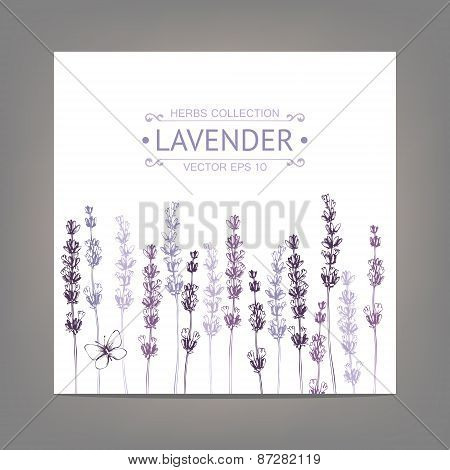 Vintage background with lavender flowers sketch