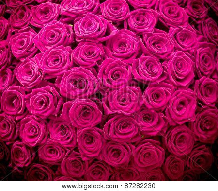 Magenta natural roses background
